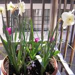Un accenno di primavera…
