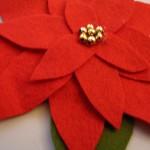 le mie stelle di Natale……