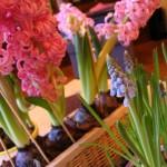 Ho voglia di primavera…