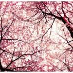 Oggi voglio scrivere in rosa……………..