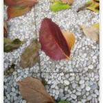 Mezzelune di frolla ripiene alle noci, cioccolato e pere
