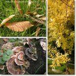 Attimi d'autunno………