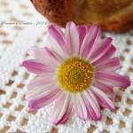 Muffins di farro alla pera profumati alle spezie e fiori
