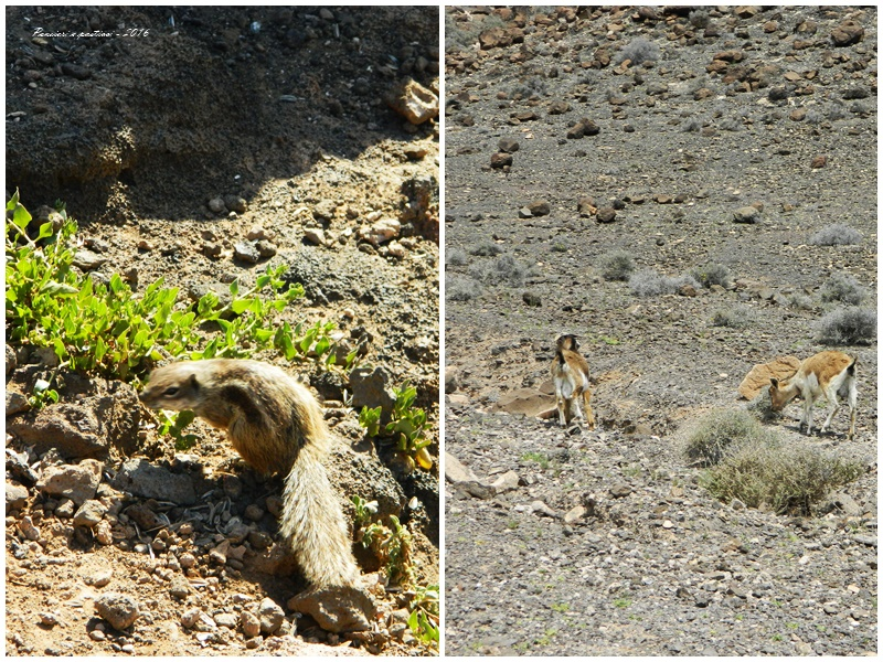 collage animali - Fuerteventura 2016
