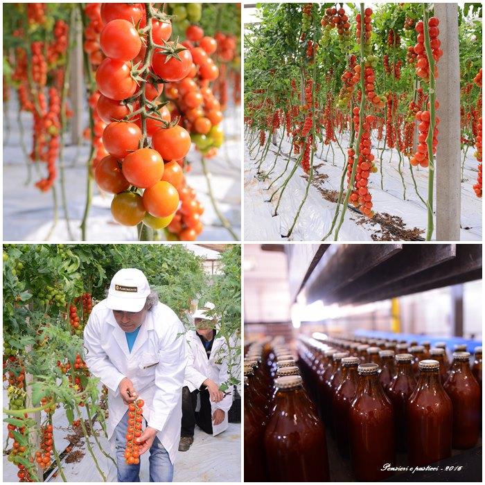 collage-pomodorini