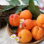 Ricette con le albicocche, cinque idee per voi